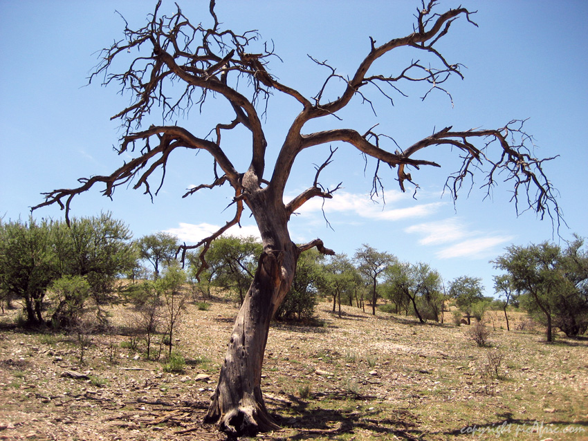 Dead tree in the Dan Viljoen Game Park near Windhoe in Namibia