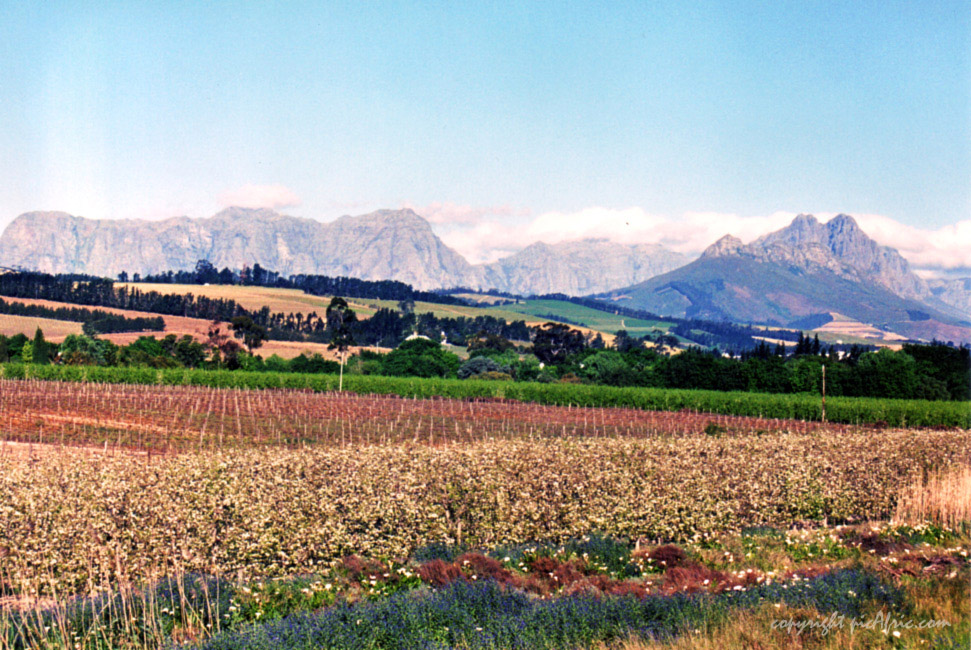 Cape Winelands - Helderberg Mountain Chain