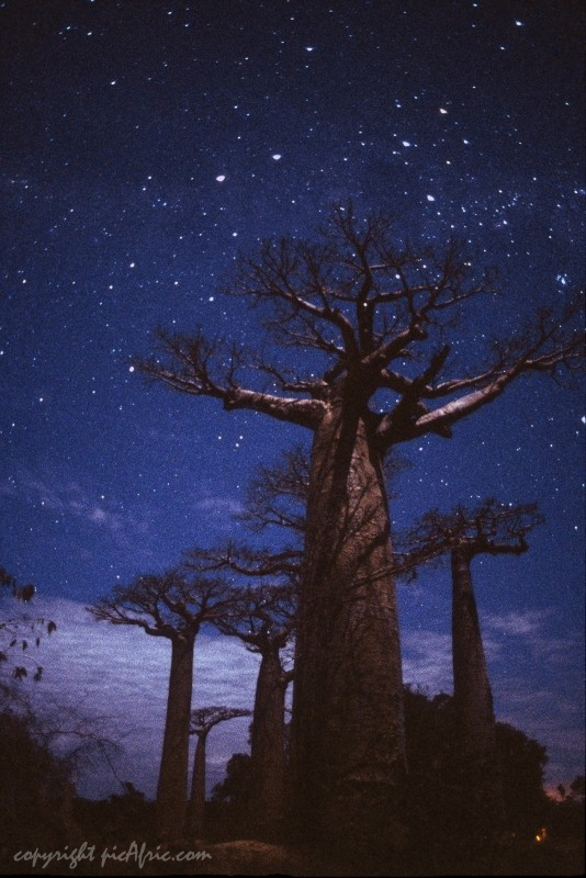 Southern Crux over the Baobab